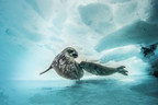 Pew: Lack of Progress on Antarctic Marine Protections a Cause for Concern