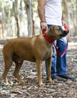 "Boss Dog® Brand Unveils ""Ultra-Premium"" Collars And Leashes In New Boss Tactical™ Line"