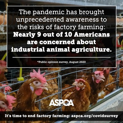 The cost-cutting efficiencies of factory farming put animal and human lives at risk; consumers, rural communities, farmers, workers and the environment are being hurt by these damaging industrial systems.