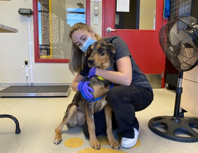 PEDIGREE Foundation is giving $1 million in grants this year to assist shelters and rescues in ending pet homelessness and help 150,000+ dogs find loving homes