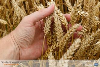 Plus de 15,2 millions de dollars en soutien aux producteurs de Céréales et canola grâce au Programme d'assurance stabilisation des revenus agricoles (Groupe CNW/La Financière agricole du Québec)