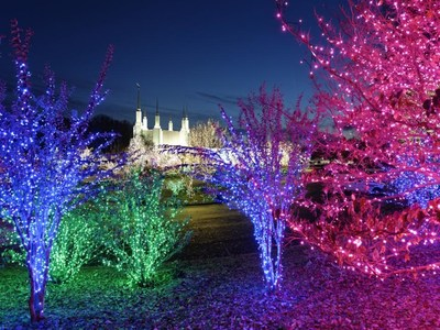 The glow of over 400,000 lights will greet visitors for the drive-thru/no-contact edition of the Festival of Lights at the Washington DC Temple this Christmas season.