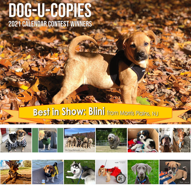 Dog U Copies: Dog Photo Contest Winners Find Fame and Free Printing