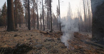 "Broad Coalition Of Agriculture, Business, Environmental, Forestry Leaders Call On Gov. Newsom, Legislature For ""Urgent Action"" On Wildfires WeeklyReviewer"
