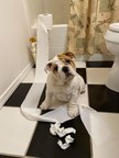 Meredith Corporation's Daily Paws Names Besa the Bulldog Winner of Inaugural Pet Etiquette Fails Photo Contest Sponsored by Mars Petcare's GREENIES™ Brand