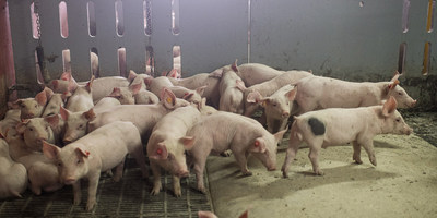 It is a relief to the Belgian pork suppliers that the OIE has published Belgium's ASF-free status. (PRNewsfoto/VLAM)