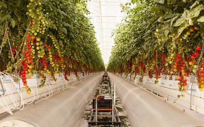 ALPS Greenhouse (CNW Group/Australis Capital Inc.)