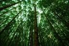 B3 confirma JBS no Índice de Carbono Eficiente...
