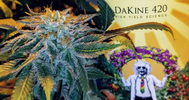 Dakine 420 High Yield Science for Cannabis cultivation