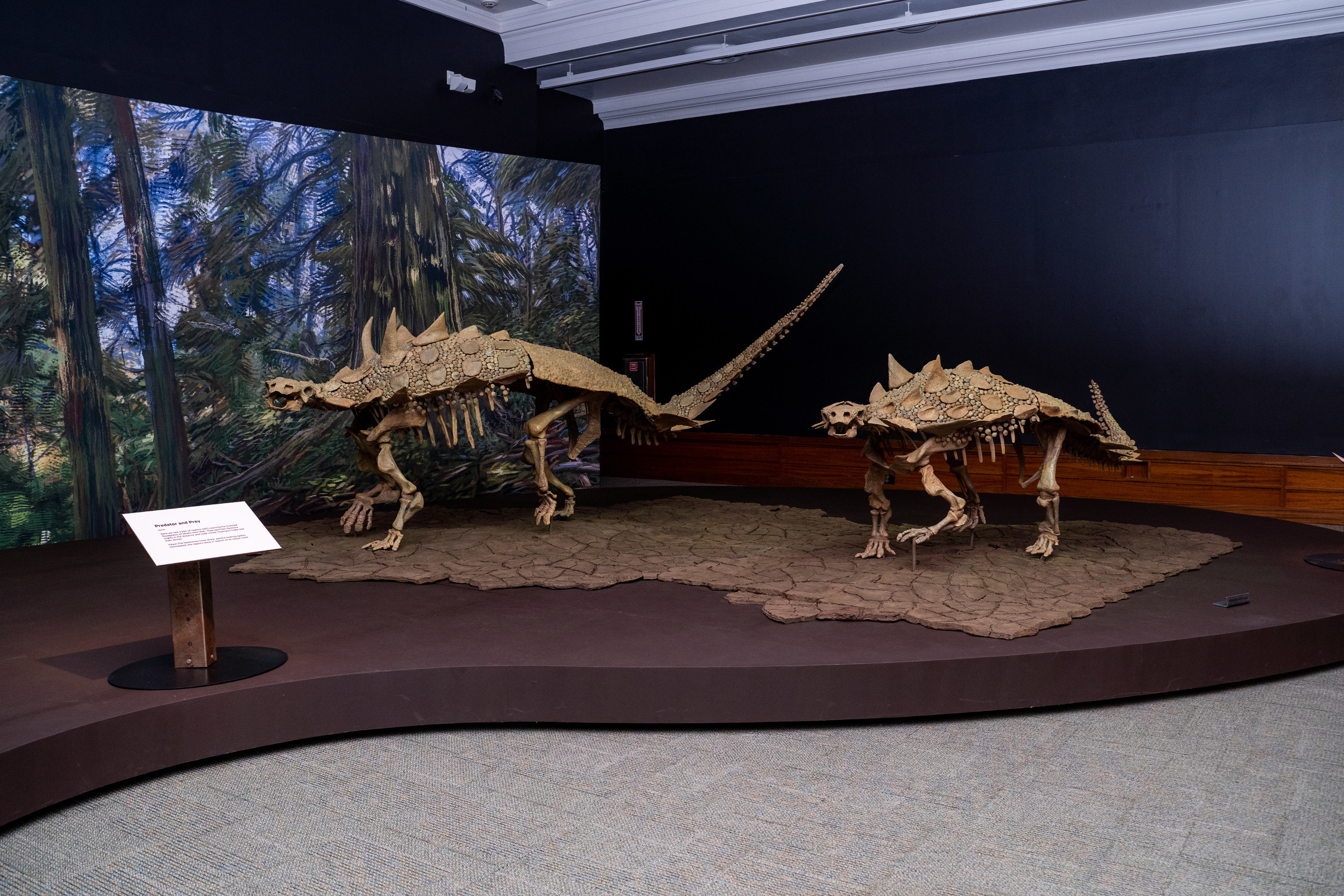 Carnegie Museum of Natural History Announces New Lineup of Virtual Experiences