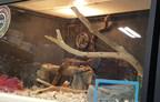 世界动物保护呼叫宠物队停止销售野生动物
