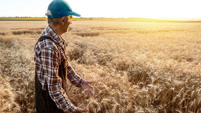 Farmer in Wheat Field