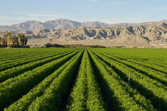 El Centro is the largest city in the Imperial Valley, and is surrounded by thousands of acres of farmland that has transformed the desert into one of the most productive farming regions in California. Among other crops, it is known for its extensive carrot fields.
