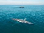 世界动物保护支持新的鲸鱼遗产