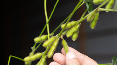 SOURCE™ Soybeans gives plants access to natural forms of nitrogen and phosphorus, supporting increased yield with less impact on the environment.