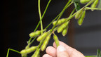Sound Agriculture Launches SOURCE™ Soybeans to Increase Access to ...