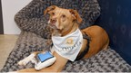Wyndham Hotels & Resorts Joins with Rover to Make Pet-Friendly Travel Easier for New Pet Parents