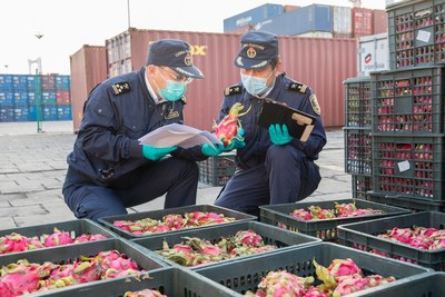 Xiamen Customs officers examine imported fruit. [Photo provided to China Daily]