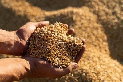 Univar Solutions fortalece as ofertas de ingredientes alimentares por meio de um acordo exclusivo com a EverGrain™ na América Latina