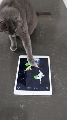 Enzo, the first 'Friskies Cat Fishing Champion,' playing the updated Friskies app, Cat Fishing 2. The game designed specifically for cats is now available for free download on iOS and Android devices.