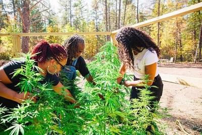 40-acre Coop founder Angela Dawson and members on their hemp farm in Minnesota. (CNW Group/Charlotte's Web PR Marketing)