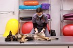 Beating back pain in dogs: Researchers to test new use for shockwave therapy to bring relief