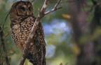 加拿大和不列颠哥伦比亚省推出了新的自然协议