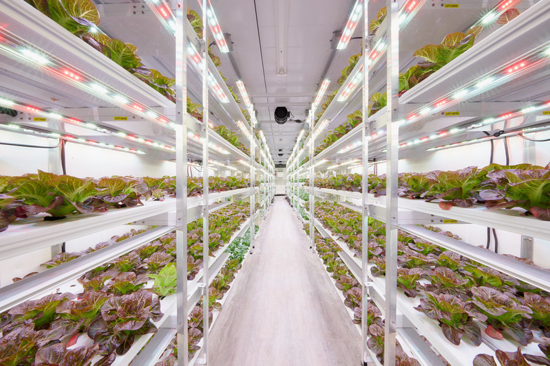 AmplifiedAg's compact farm design operates directly at the point of consumption, maximizes growing space, and is easily scalable in food deserts and space-limited areas. The company's proprietary OS gives farmers total transparency and control of horticulture, food safety, production and business management.