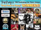 TrapKing's 'From Feral to Fancy' CFA Cat Photo Contest Reaches its Successful Conclusion