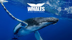 Clearwater Marine Aquarium Announces Opening Date for Immersive Whale Exhibit