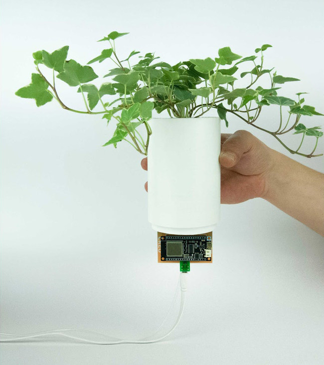 BioBulb, a sustainable, smart green living system