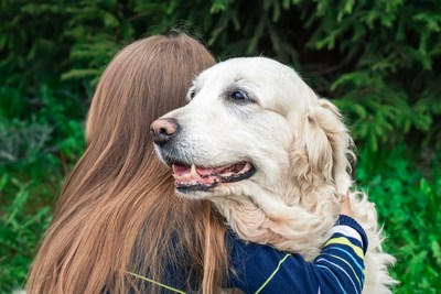 Morris Animal Foundation is partnering with the Purina Institute to advance the knowledge of canine cognitive dysfunction syndrome (CDS), which affects about 14% of dogs 8 years and older. The two organizations hope to improve the understanding of CDS incidence, prevalence and types of risk factors by collecting data from the Foundation's Golden Retriever Lifetime Study.