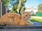 Study Of Chronic Inflammation and Cognition in Senior Cats Receives Morris Animal Foundation Mark L. Morris Jr. Investigator Award