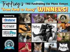 TrapKing's 'From Feral to Fancy' CFA Cat Photo Contest Reaches...