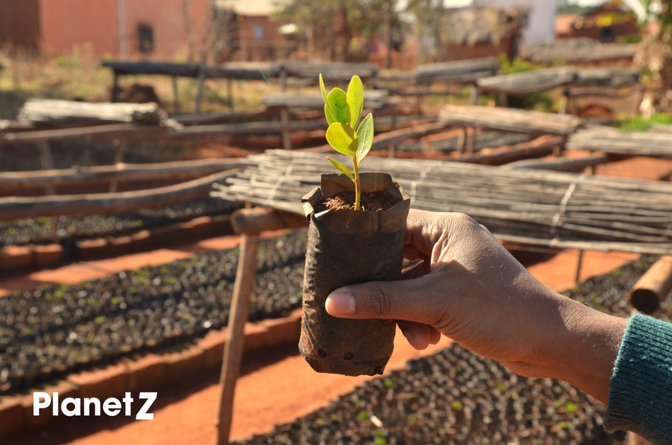 "Zentiva Accelerates its Carbon-Neutral ""Planetz"" Program by Planting a Further 27,800 Trees in Madagascar and Romania"