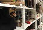 世界动物保护发布了加拿大在全球商业野生动物贸易中的作用的新报告