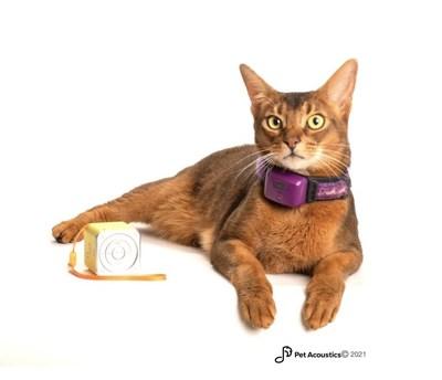 Pet Acoustics Biometric Study