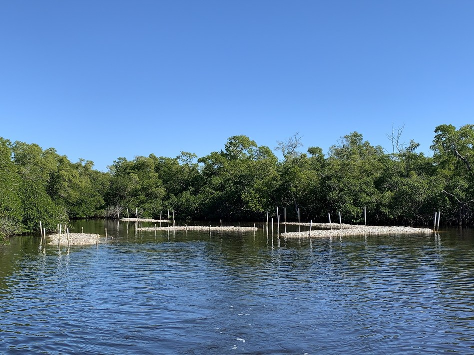 Sea & Shoreline Restores Oyster Reefs for City of Naples