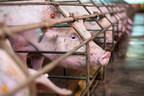 加拿大零售委员会对动物福利承诺的零售