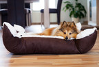 4 Ways to Refresh Your Pet's Routines...