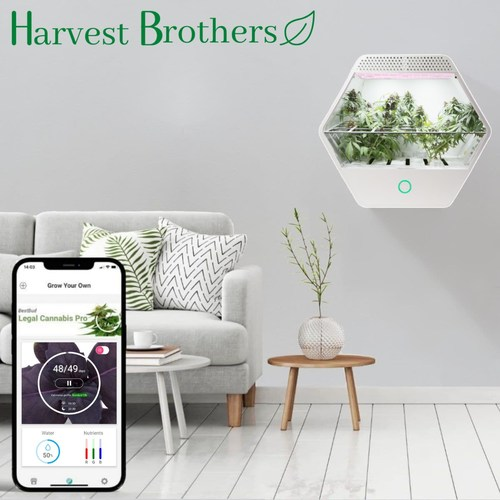 Linfa Weezy, the smartest hydroponic cannabis grow box that makes it easy for anyone to grow cannabis at home, is now available in Canada. Higher quality cannabis at lower cost than any other grow box. (CNW Group/Harvest Brothers Corp.)