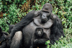 In Time for Earth Day, Congolese Government Strengthens...