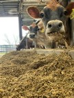 Every Day Is Earth Day For Dairy Farmers