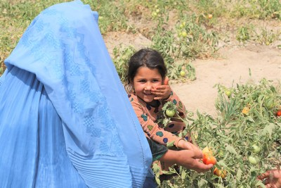 Severe drought and water shortages were having a serious impact on Sahar Gul, 33, and her family, but now she is able to grow tomatoes to help feed her family and earn income thanks to a World Vision irrigation project in her community. Naizabeha, Afghanistan. Photo: Mohammad Elias Hatimi, World Vision (CNW Group/World Vision Canada)