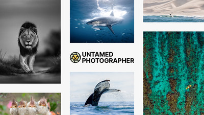 Untamed Photographer