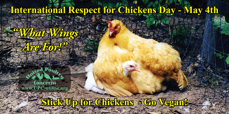 International Respect For Chickens Day - May 4th.