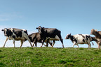 Organic Valley Challenges Families to Get MOOving This May...