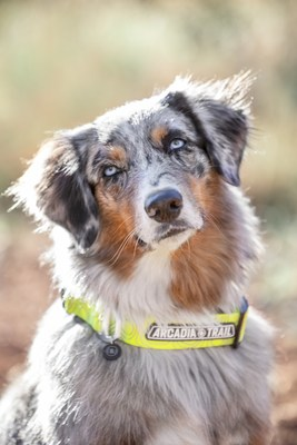 PetSmart adds new pet gear and accessories to outdoor collection, Arcadia Trail