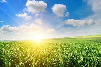 Univar Solutions宣布与陶氏陶瓷的合作伙伴关系在墨西哥分发农业硅胶基泡沫控制产品