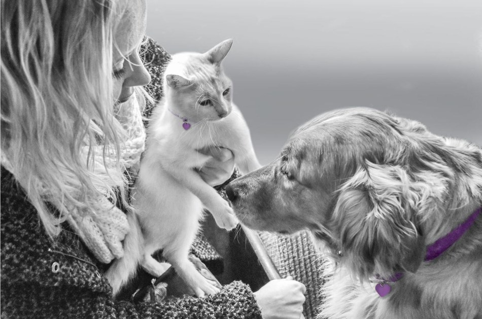 Purina Celebrates National Pet Month by Turning Pet Aisles Purple to Support Domestic Violence Survivors with Pets